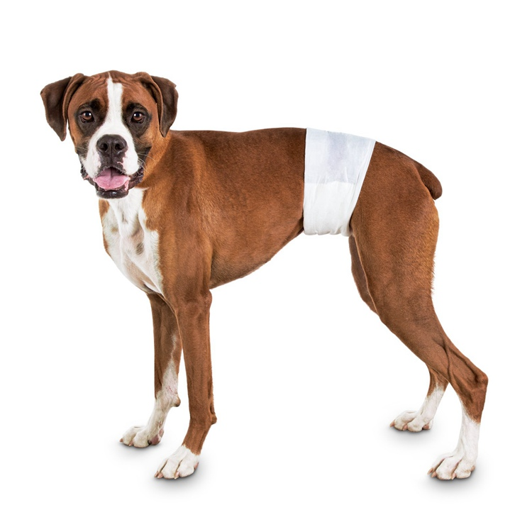 Male Dog Wraps